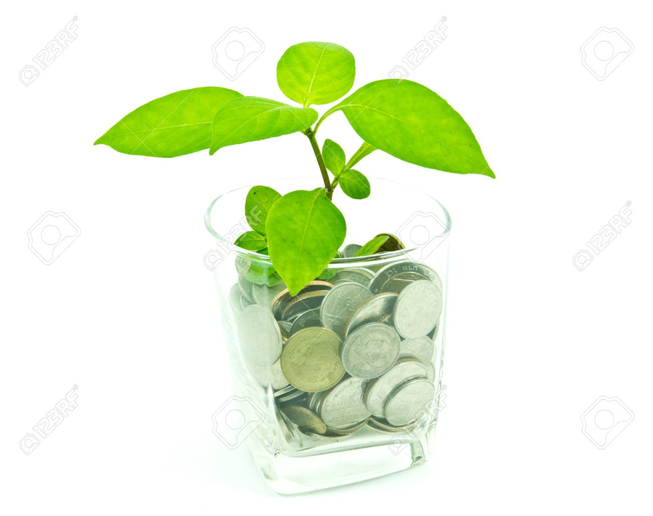 Plant and a cup of Thai coins Stock Photo - 11555185
