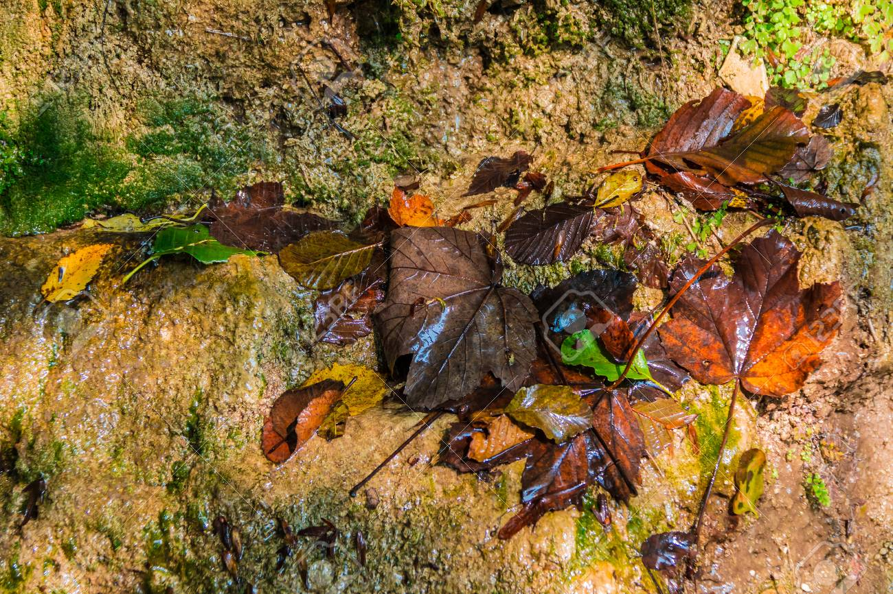 A Wet Wall Of A Mountain With Lying Rotting Autumn Leaves Of