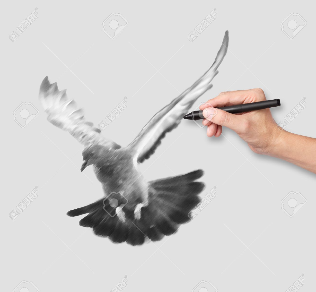 hand drawing a flying pigeon in black and white Stock Photo - 15787865