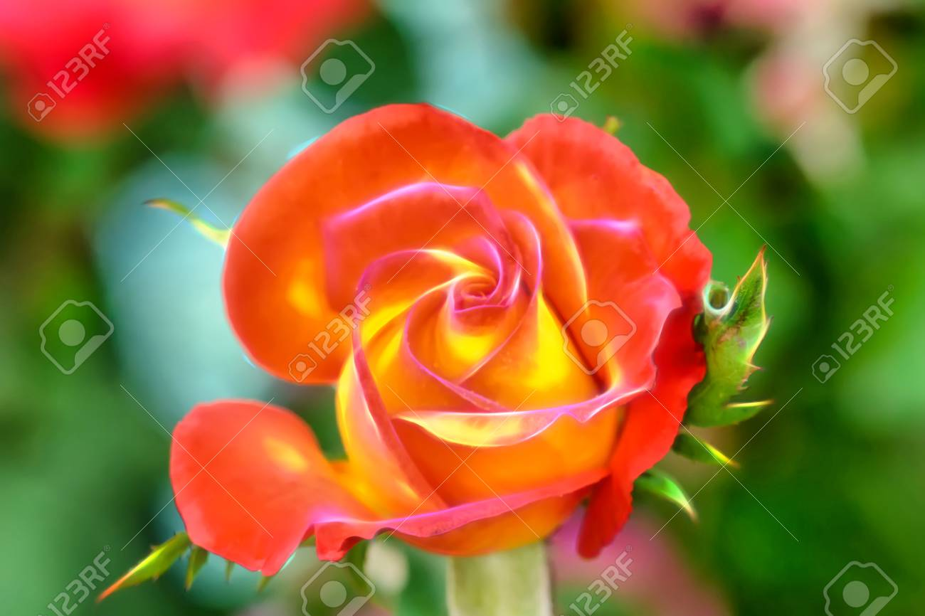The Rose Is The Flower Represents Love. Its On Effect Glow Wire ...