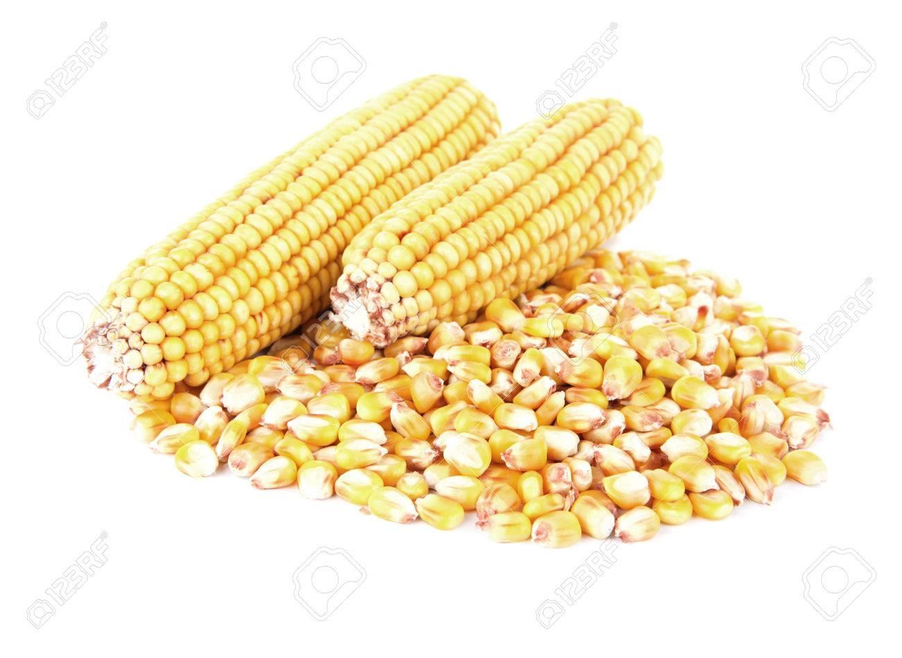 Corn - 35873181
