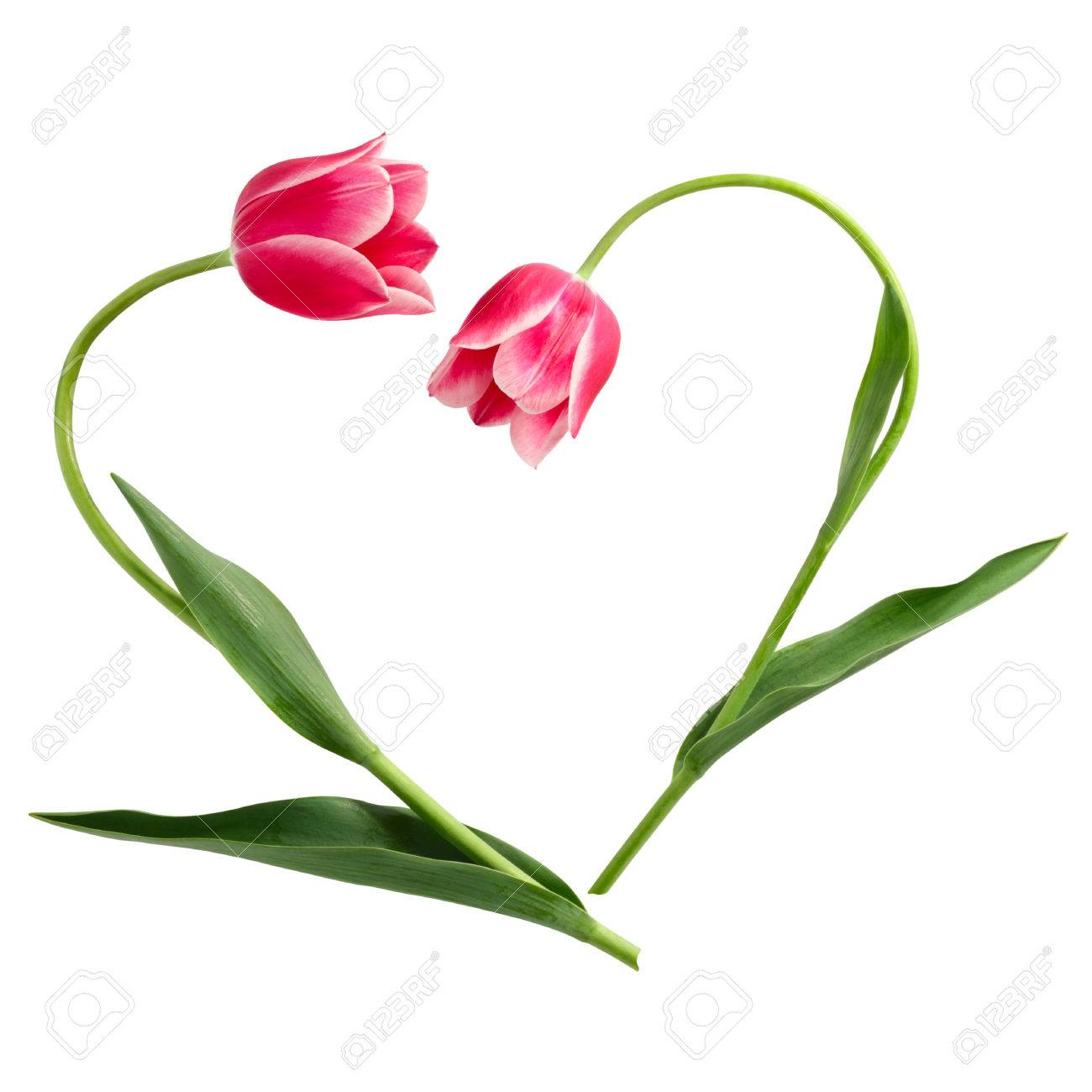Patrón De Flores La Forma De Corazón De Dos Tulipanes Fotos