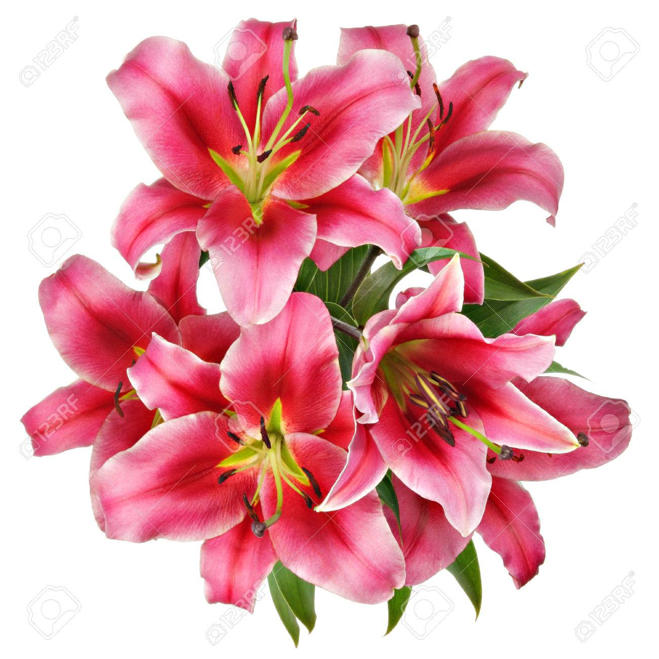 Vintage Flowers Pattern With Pink Lilies Isolated On White Stock