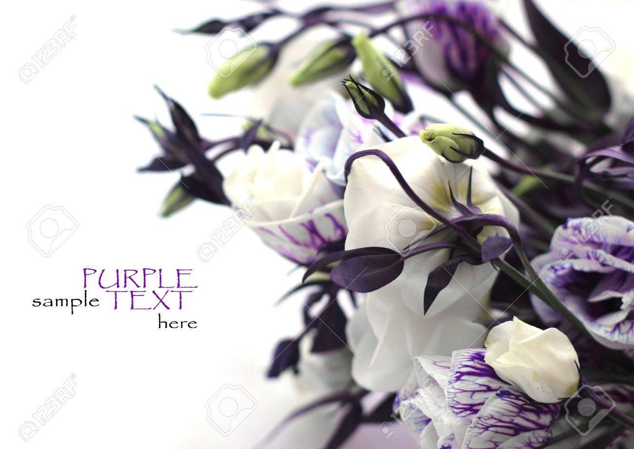 Purple flowers on a white background stock photo picture and purple flowers on a white background stock photo 12441375 mightylinksfo