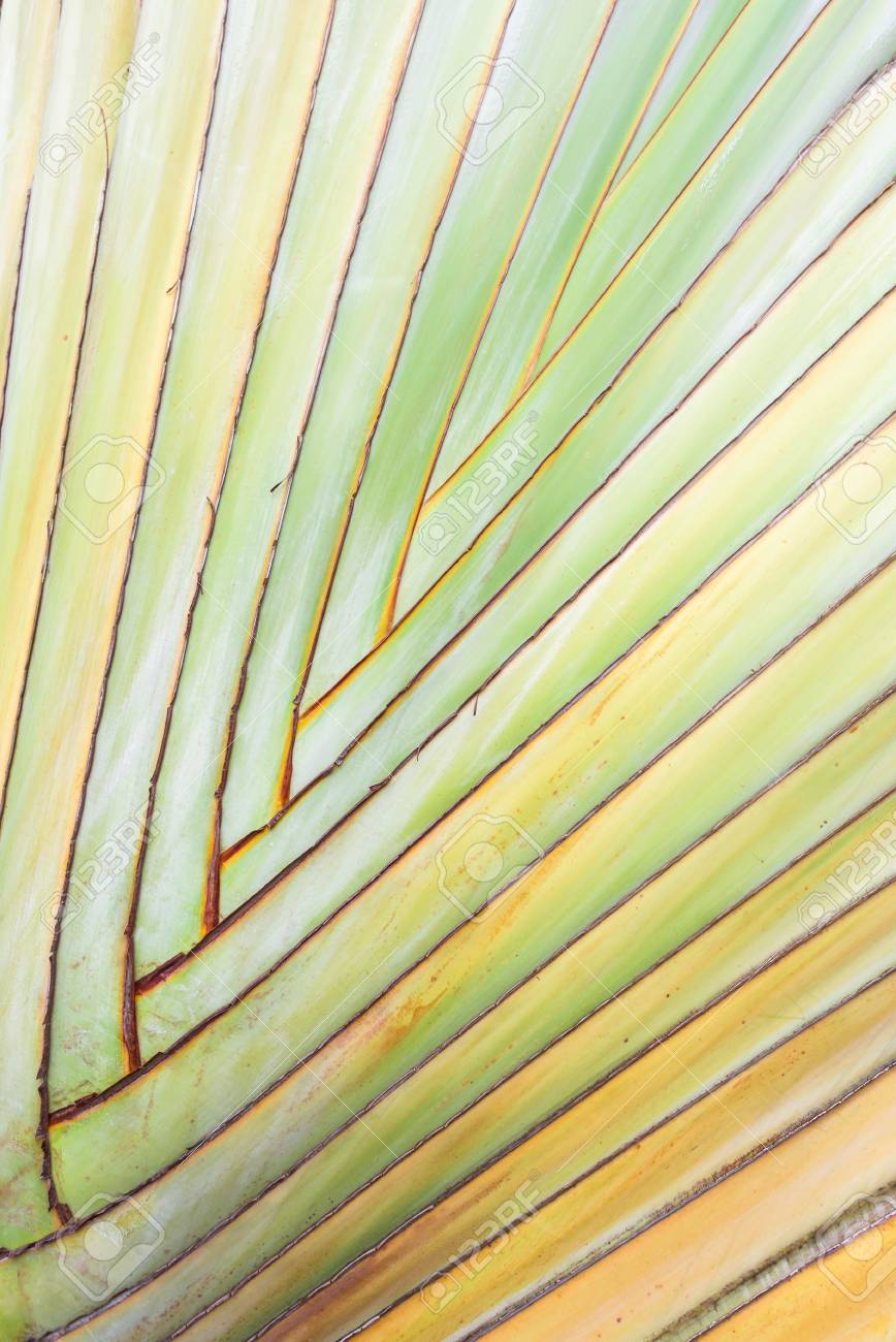 Texture Of Tree Bark. Palm Tree. Background. Pattern Of Tropical ...