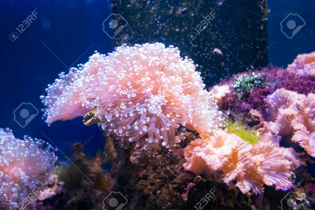 Beautiful sea flower in underwater world with corals and fish.