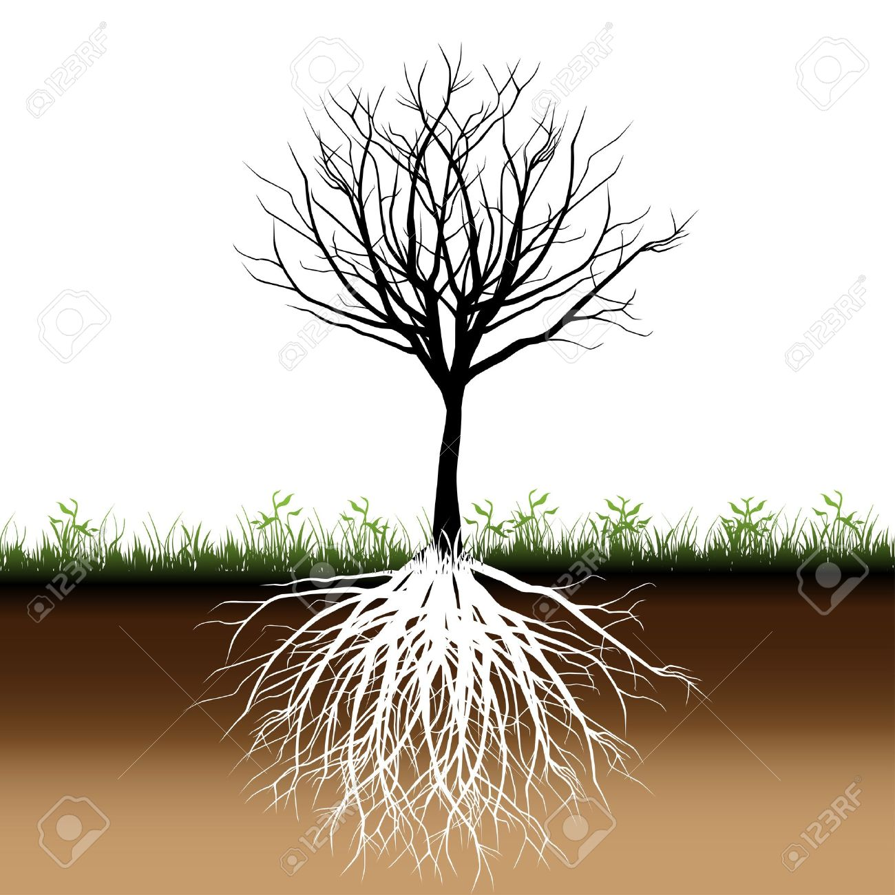 Tree roots silhouette Stock Vector - 13087756