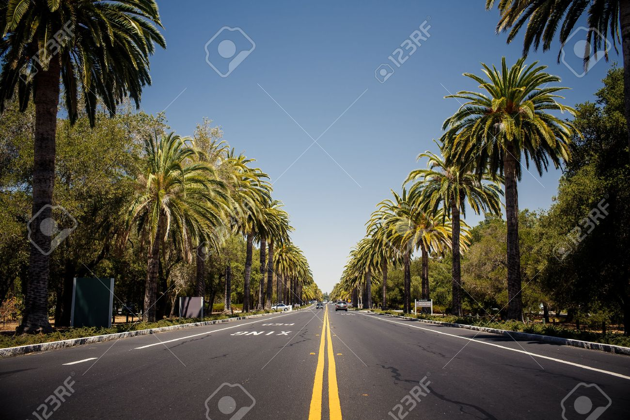 view of palm trees road in california usa stock photo picture