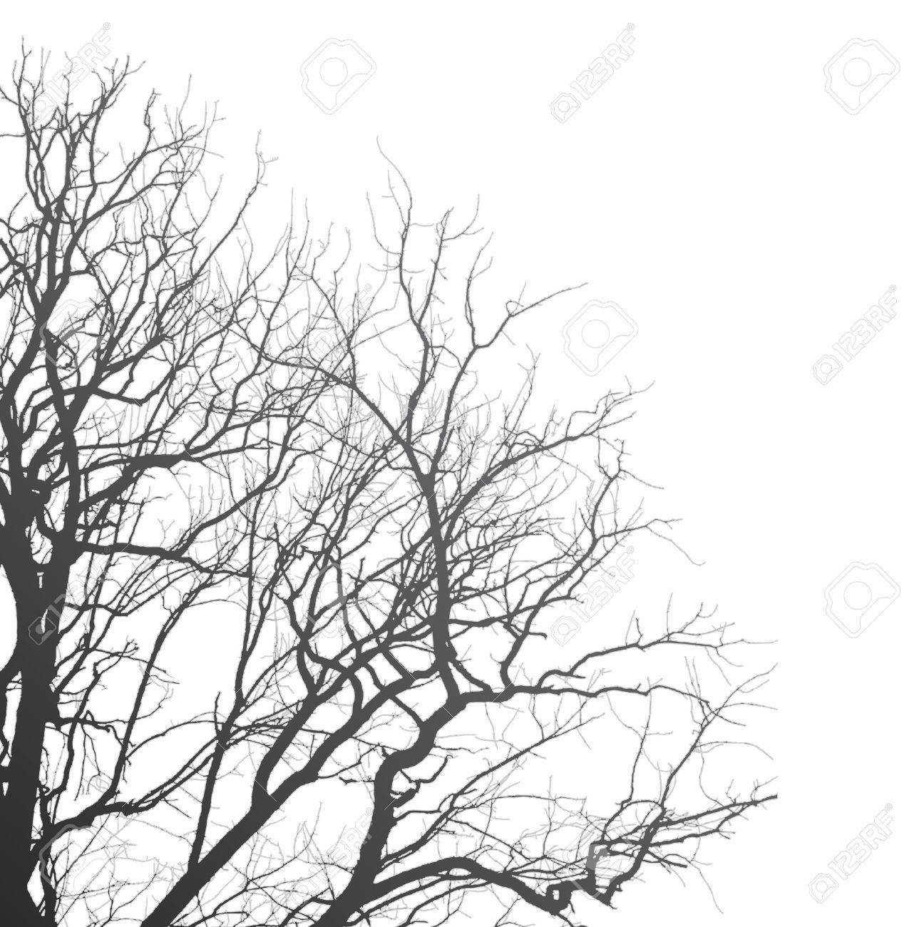 Branches of a tree on a white background, illustration clip-art - 44906900