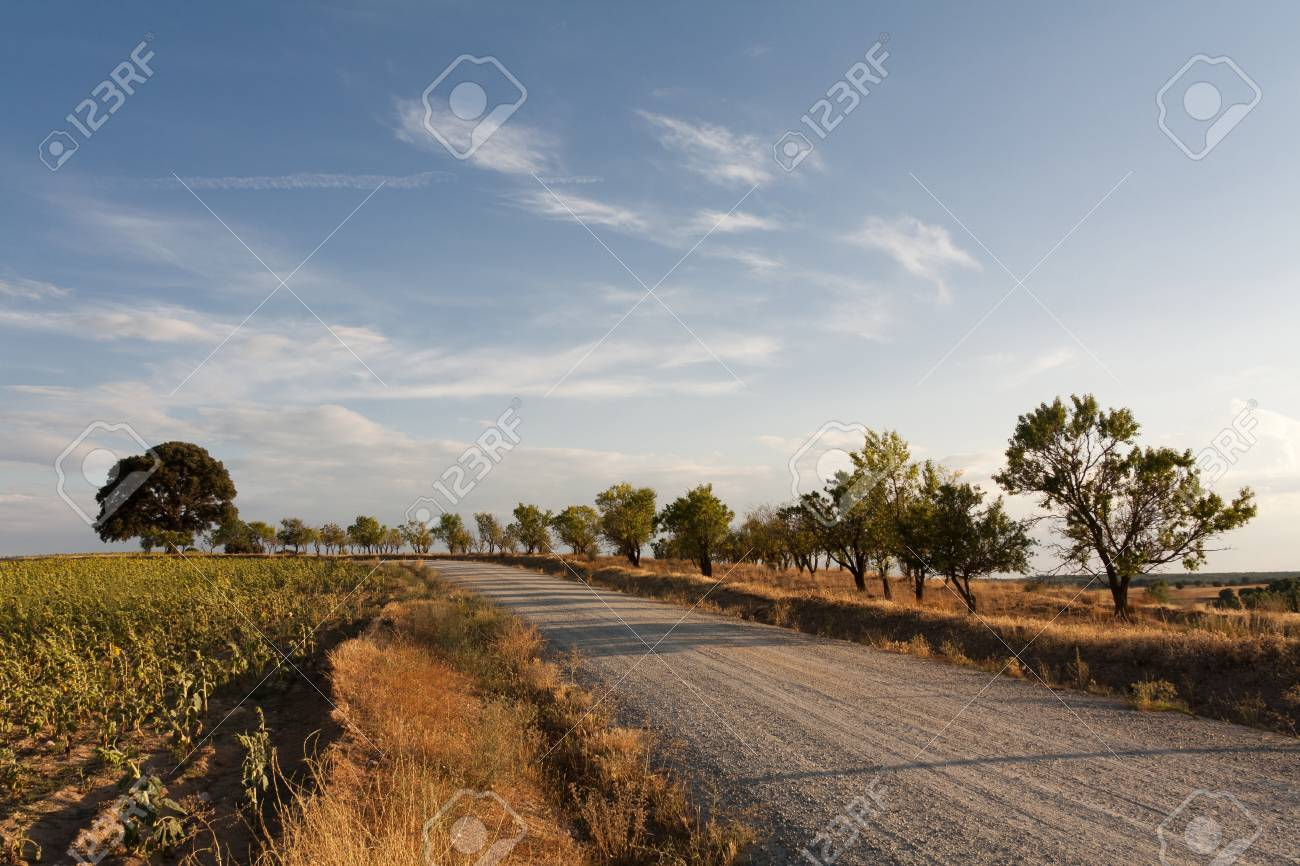 A road among trees and sunflowers during a sunset in summer Stock Photo - 14606828
