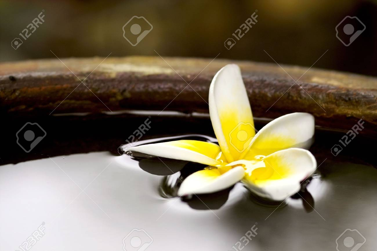 Tropical frangiapani flower floating in water in a stone pot Stock Photo - 5885722