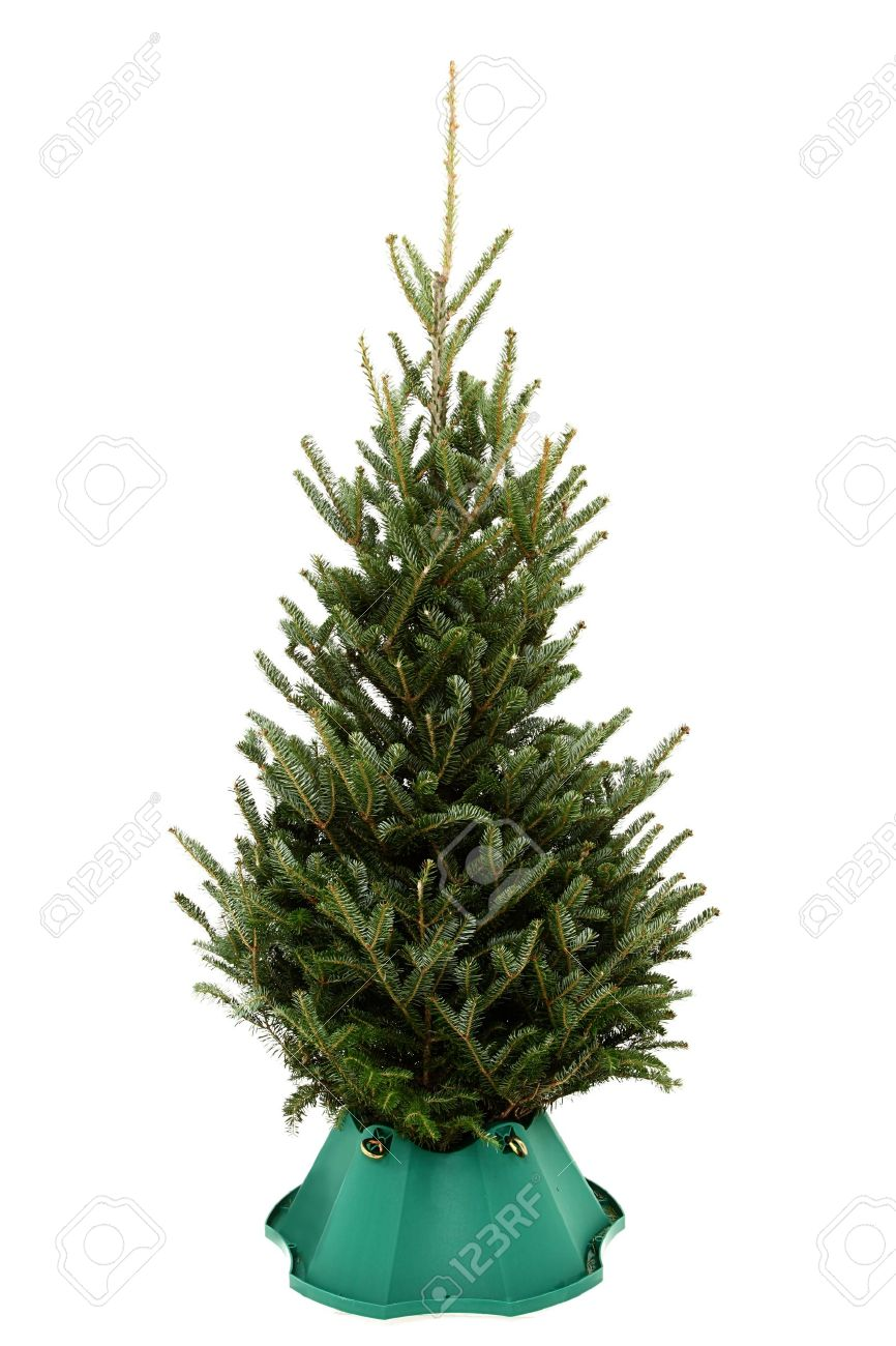 small undecorated christmas tree in plastic tree stand over white background stock photo 11836151 - Small Black Christmas Tree