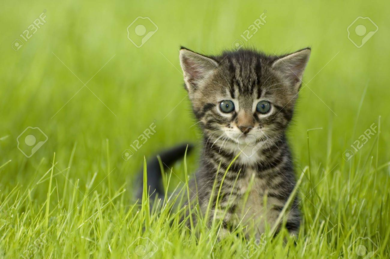 little kitten playing on the grass close up - 1050236