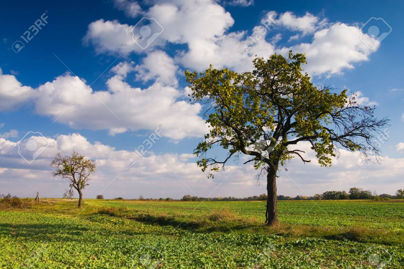 Autumn landscape (can be used how background or wallpaper) Stock Photo - 2861731