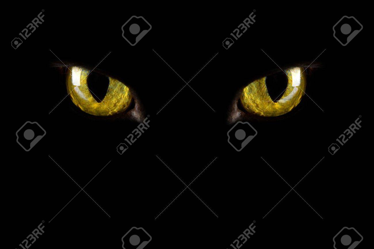 cat\u0027s eyes glowing in the dark. halloween background Stock Photo , 4547828