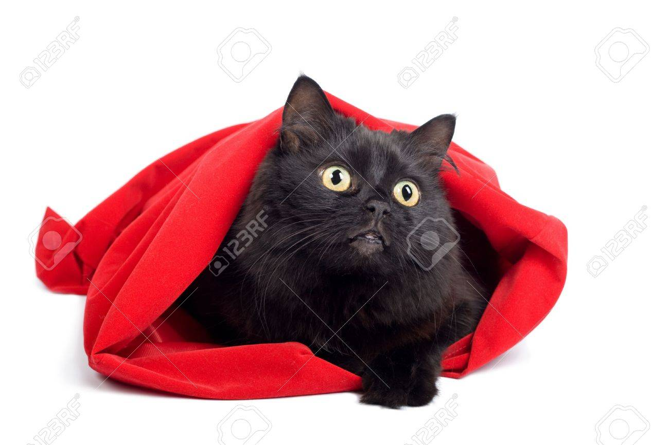 black cat in red bag isolated Stock Photo - 4775819