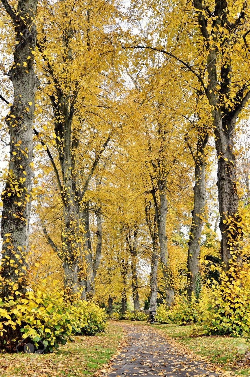 Pathway in a park, autumn season, vertical shot Stock Photo - 14245088
