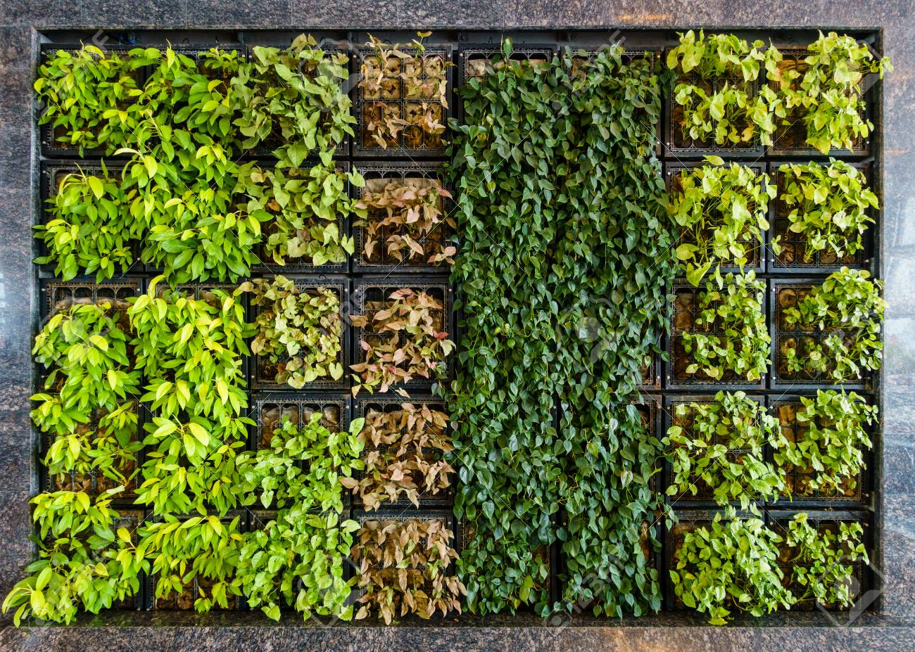 Vertical Living Wall Indoor green wall also known as living wall or vertical garden Stock Photo  - 100559590