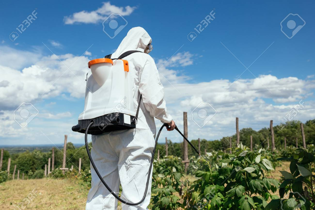 Weed control. Industrial agriculture theme. Man spraying toxic pesticides or insecticides on fruit growing plantation. Natural hard light on sunny day. - 103436546