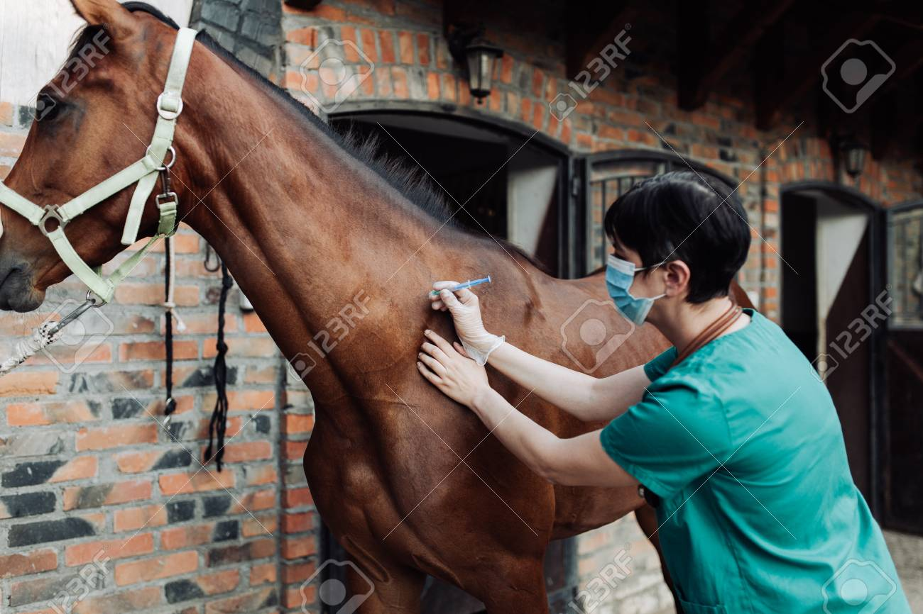 Woman veterinary checking horse health in stable - 105330817