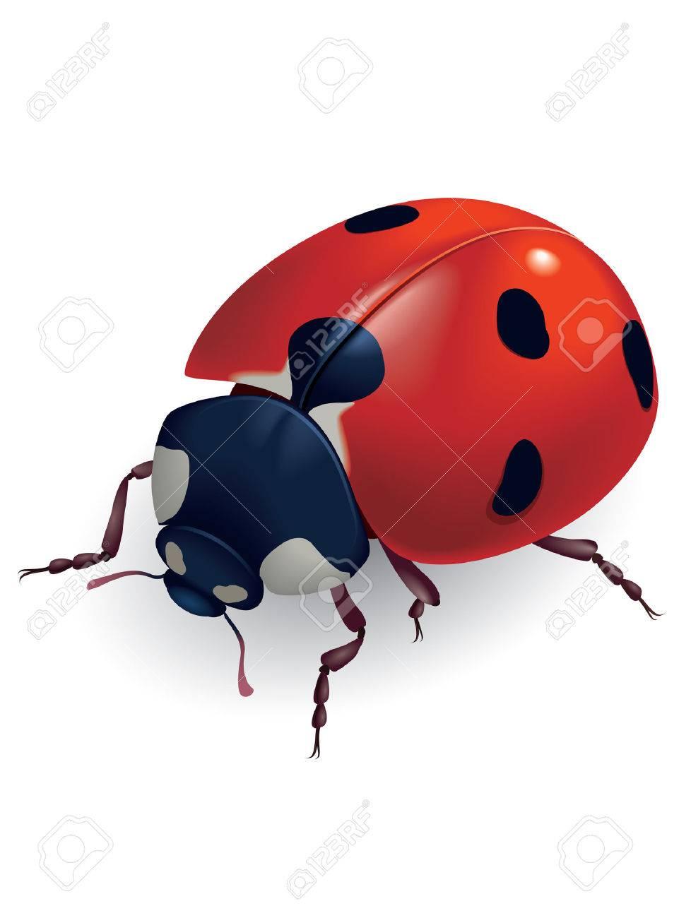 Ladybug. (Lat. Coccinellidae) Vector illustration. - 6649289