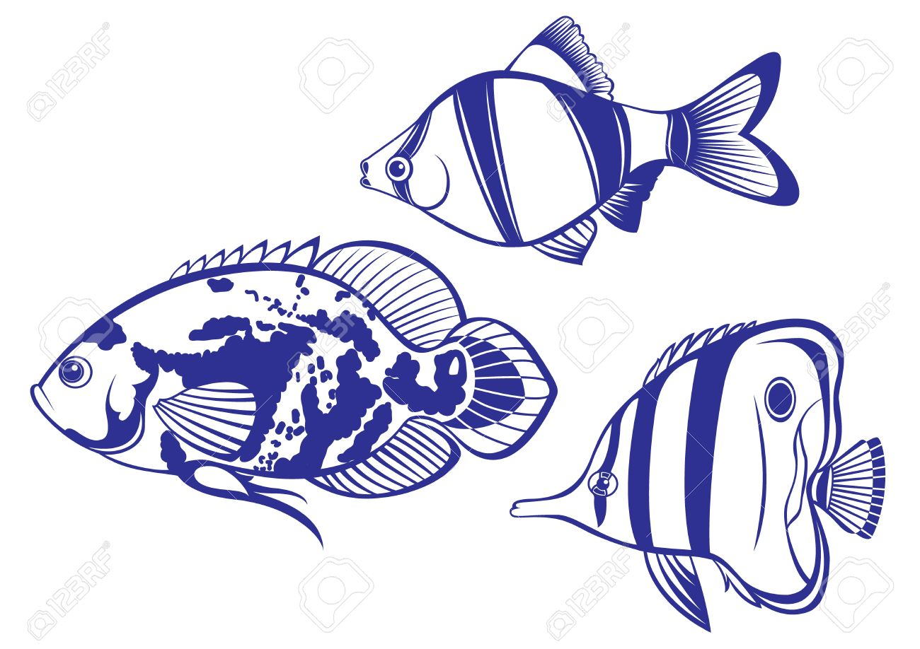 Tropical Fish. Set #2 Vector illustration on white background for design Stock Vector - 8889969