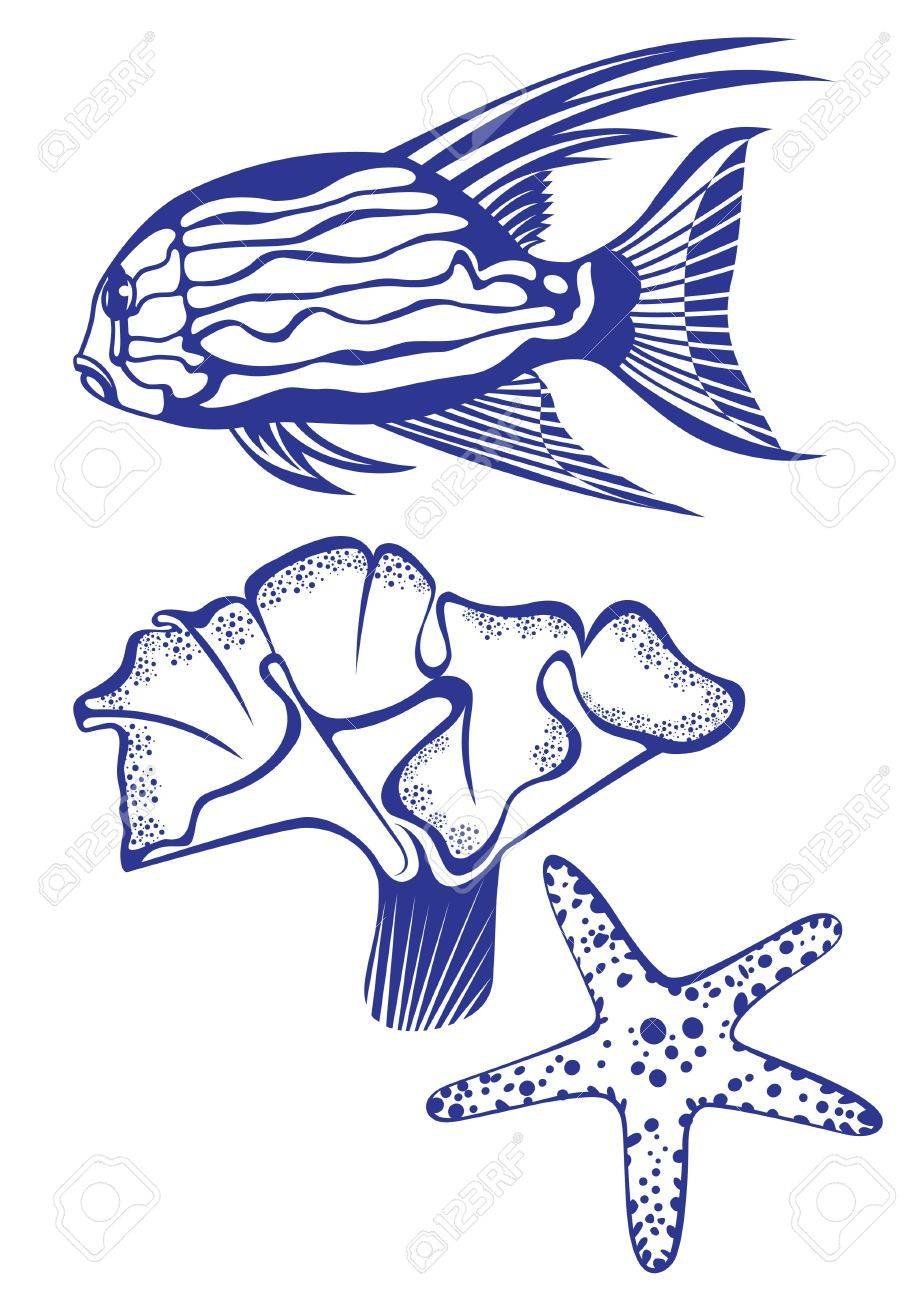 Tropical fish, coral and starfish. illustration on white background for design Stock Vector - 9157035
