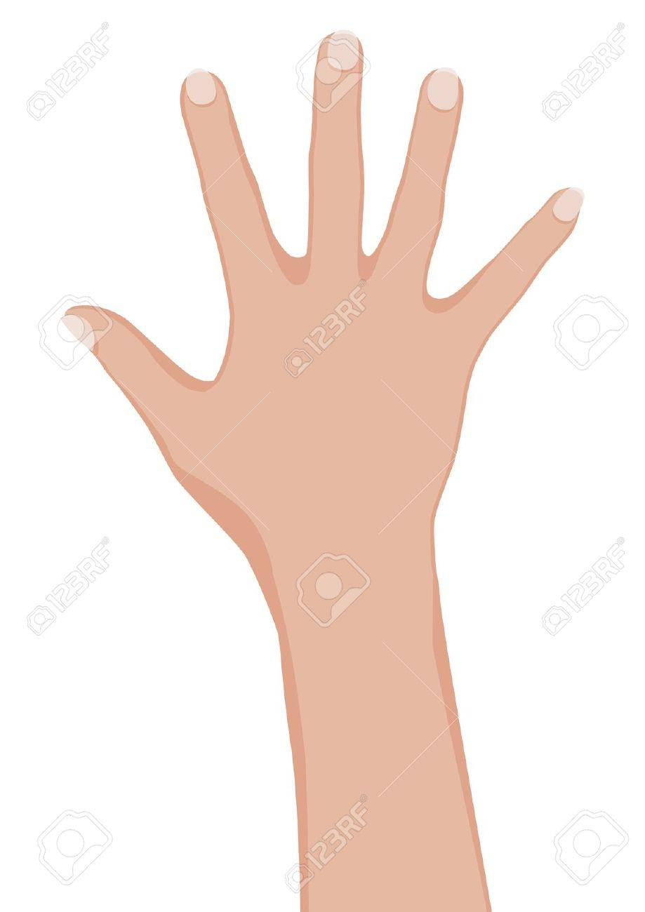 Woman hand. Stock Vector - 9892414