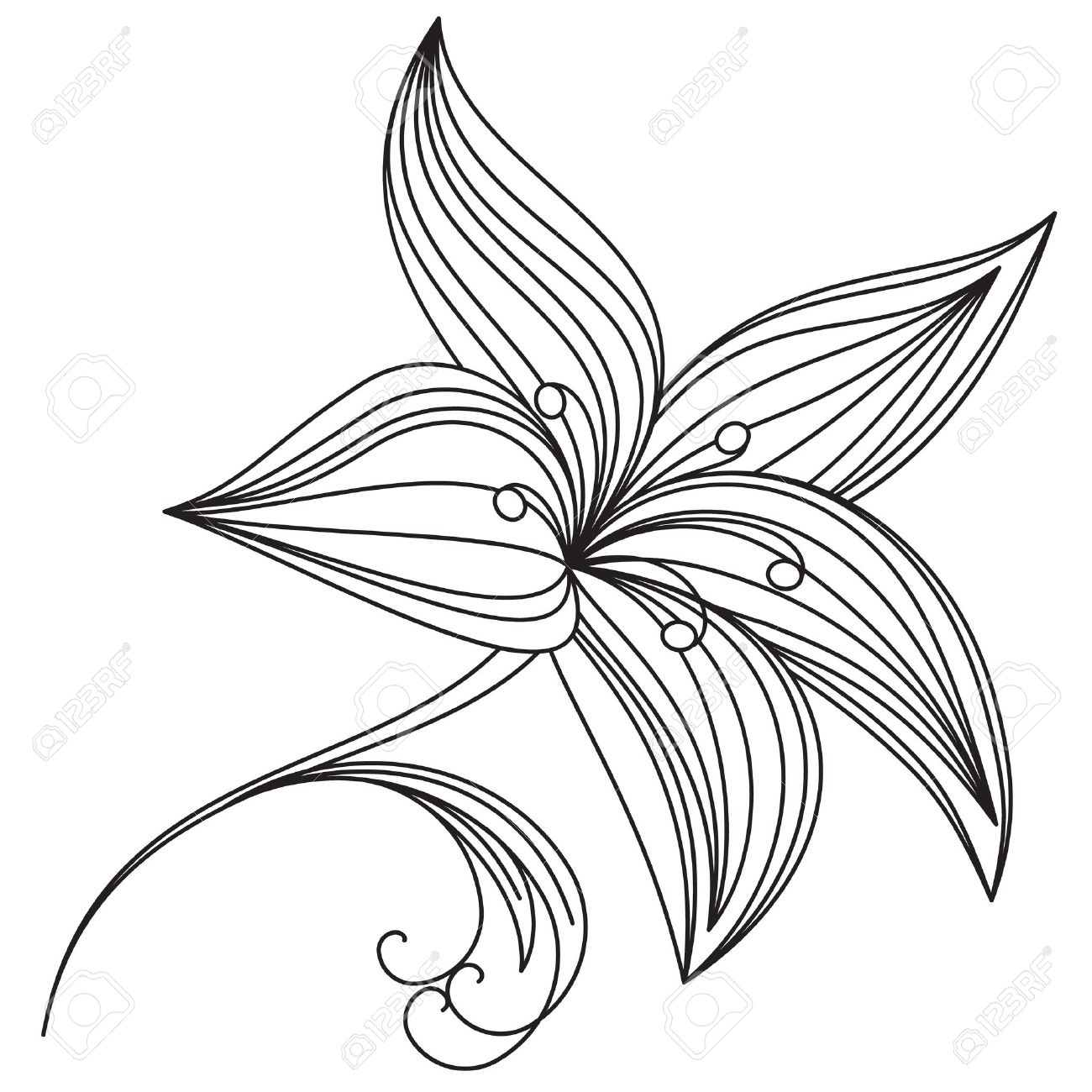 Lily Leaves Drawing Beautiful Flower of Lily