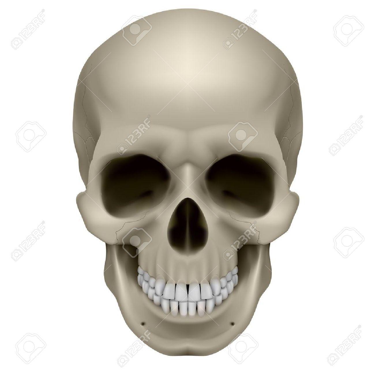 human skull, front view. digital illustration on white royalty, Skeleton