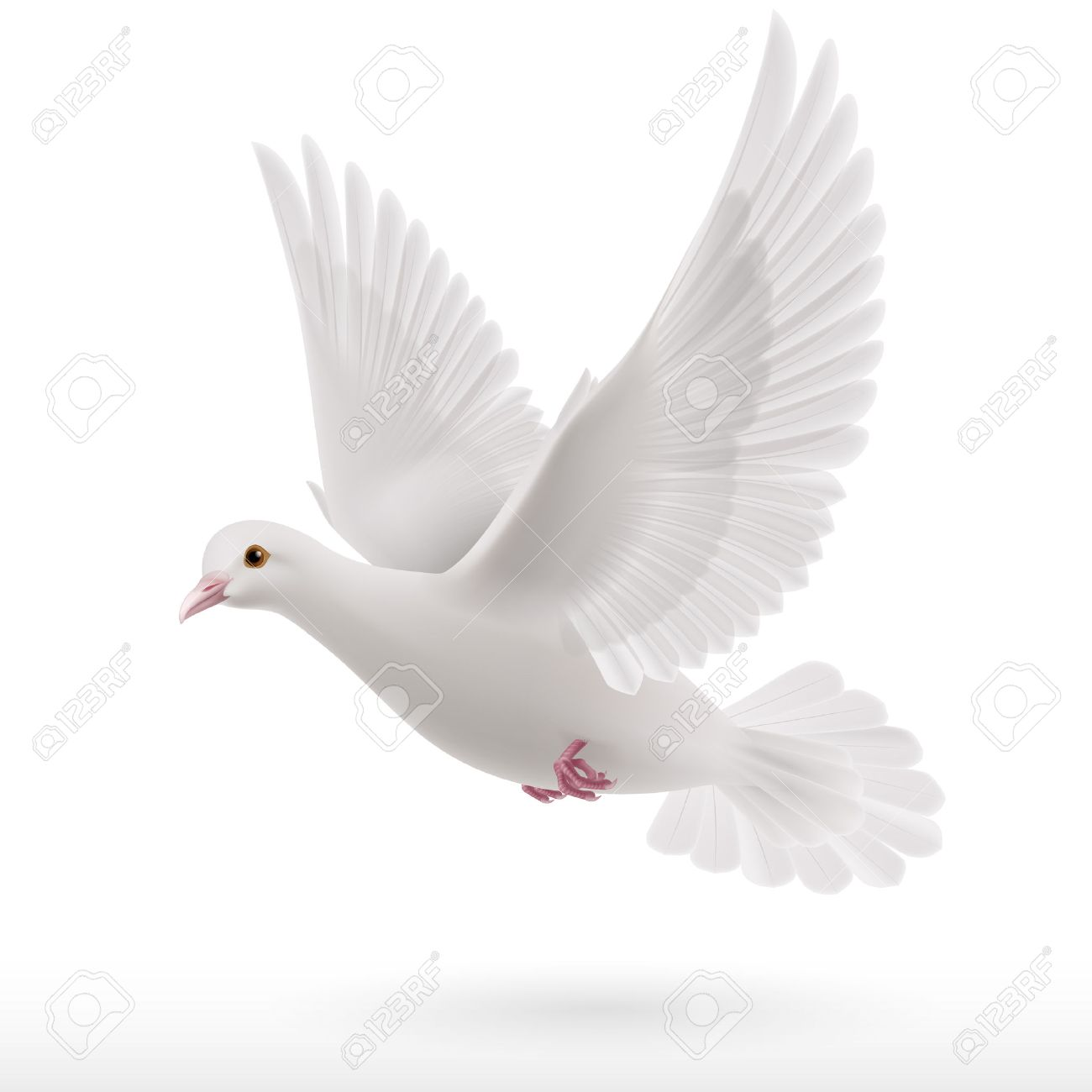 Flying White Dove On White Background As Symbol Of Peace Royalty