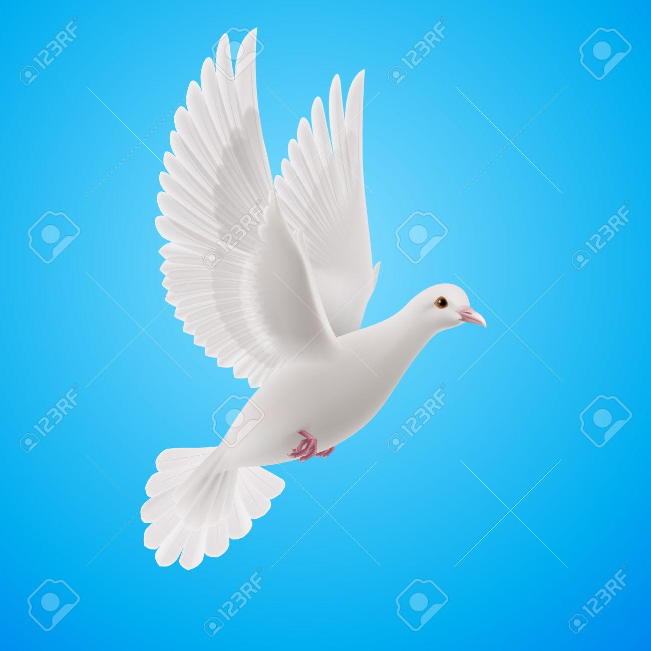 Paloma Blanca Volando Realista En El Fondo Del Cielo Azul Símbolo