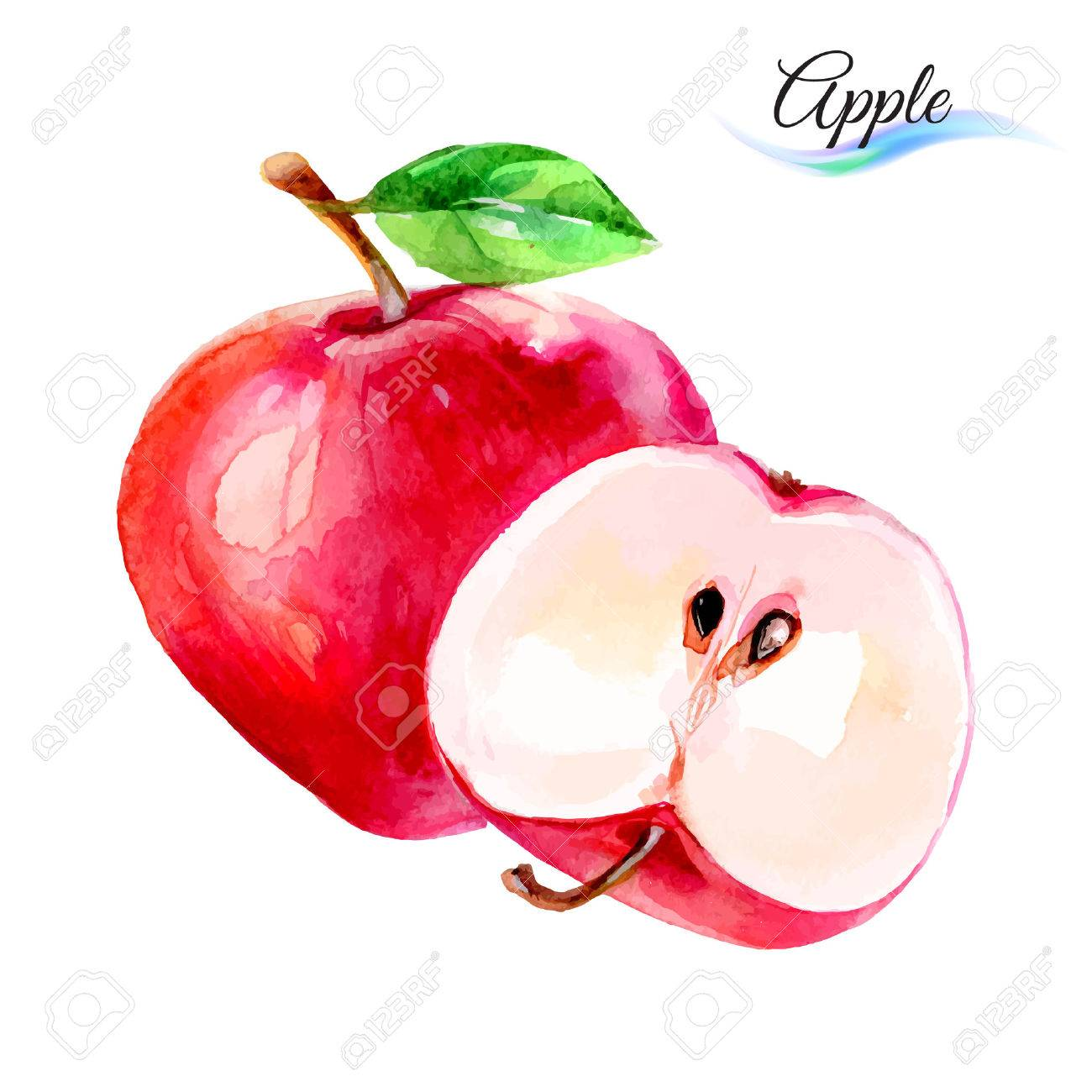 Apple drawing watercolor isolated on white background Stock Vector - 40865744