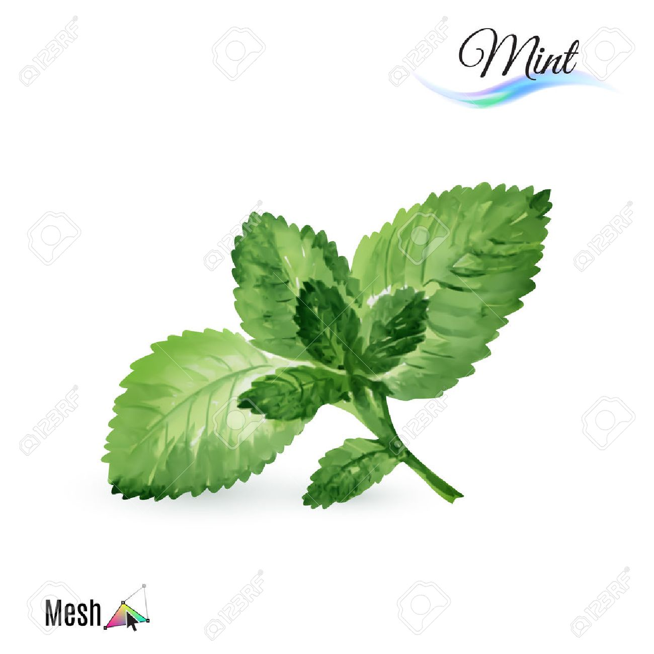 Watercolor mint plant isolated in white background Stock Vector - 48126147
