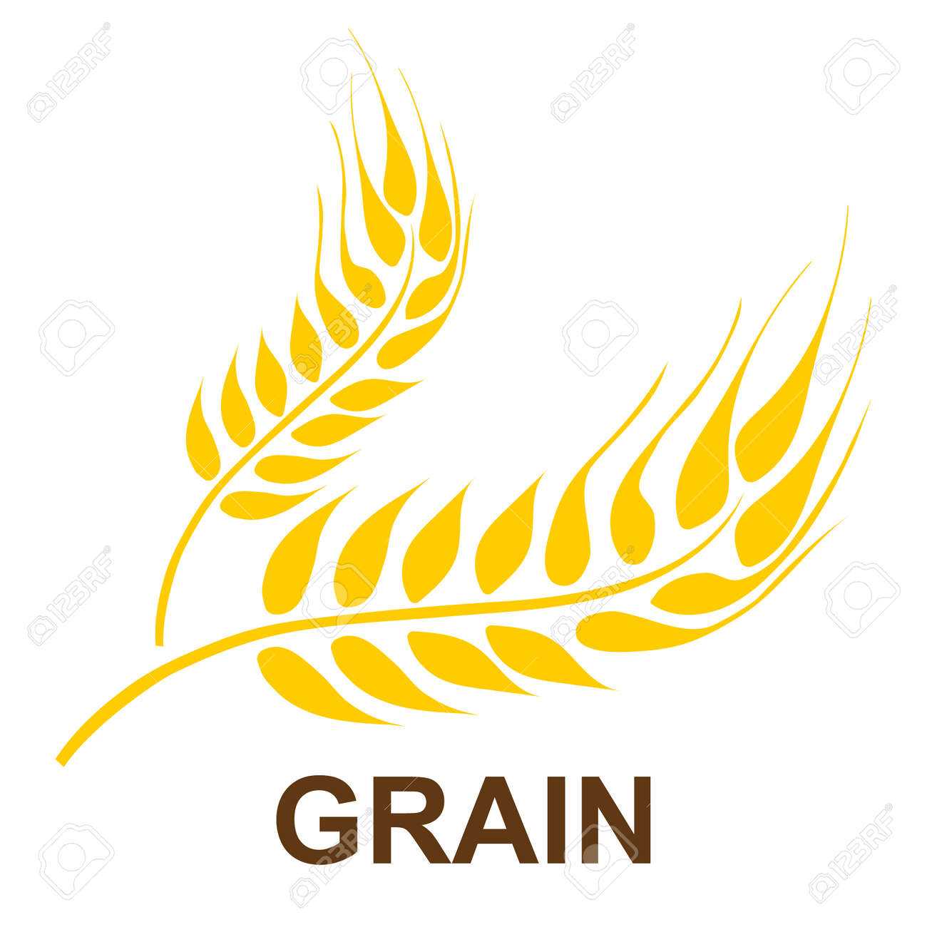 Ears of wheat. Background image of ears of wheat isolated on a white background. Vector illustration. Vector. - 162890946
