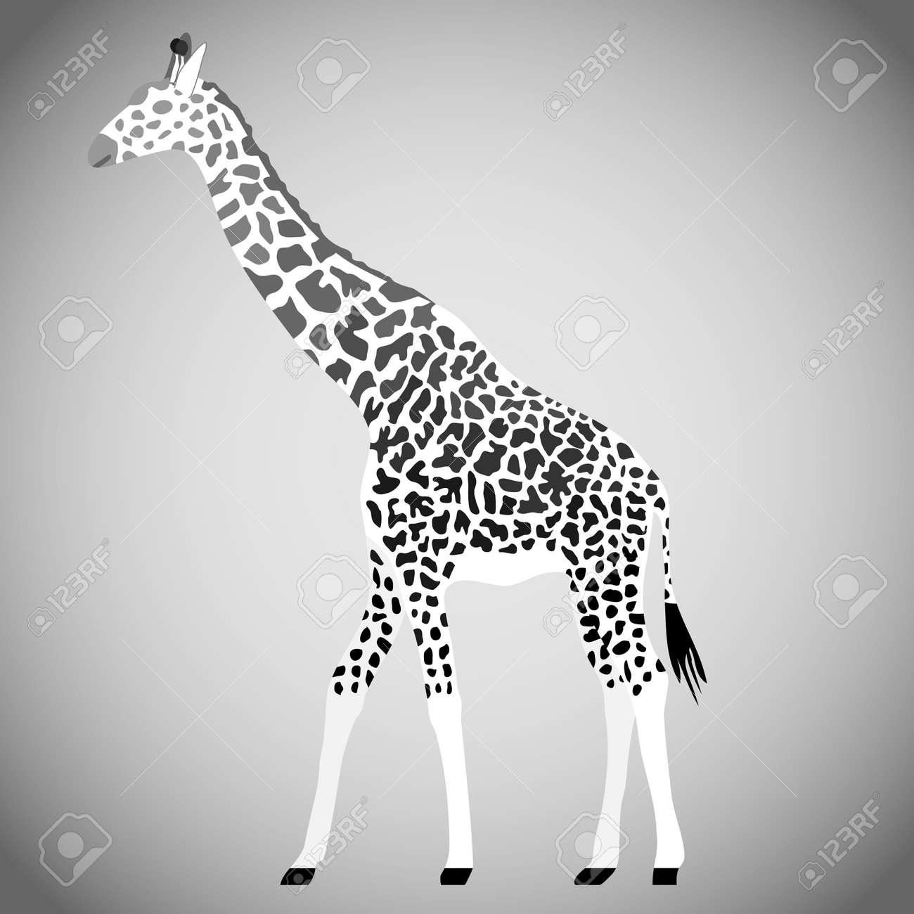 Giraffe in black and white. Giraffe isolated on a light background. Vector illustration. Vector. - 167578726