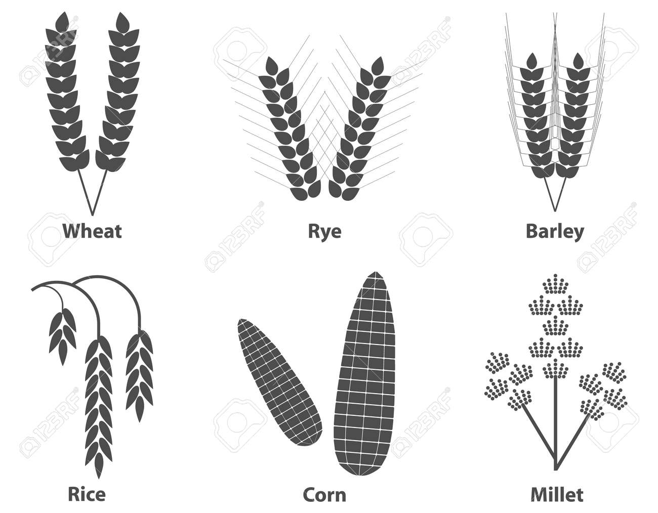 Ears of grain in black and white colors isolated on a light background. Vector illustration. Vector. - 167578728