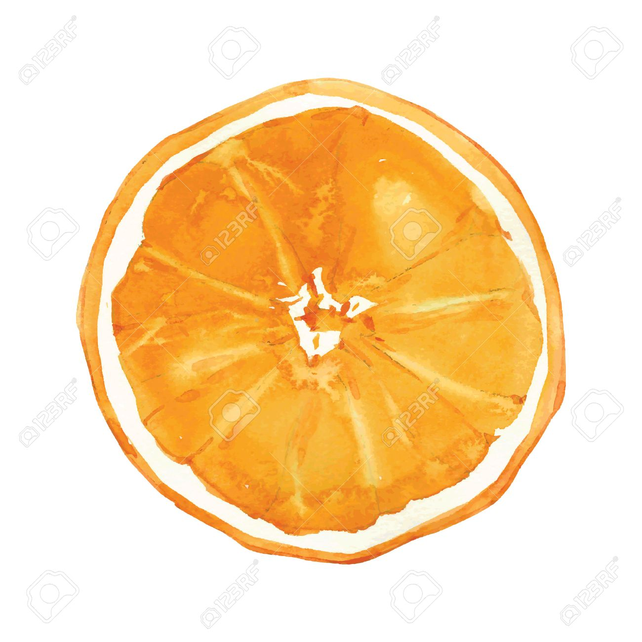 Slice Of Orange Drawing By Watercolor, Hand Drawn Vector ... for Drawing Orange Fruit  150ifm