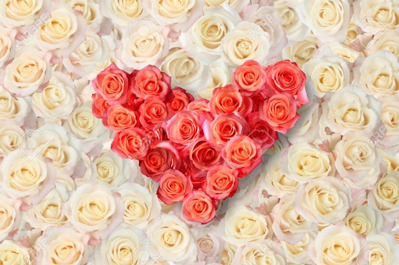 Beautiful Roses - DealsMasti.comDealsMasti.com