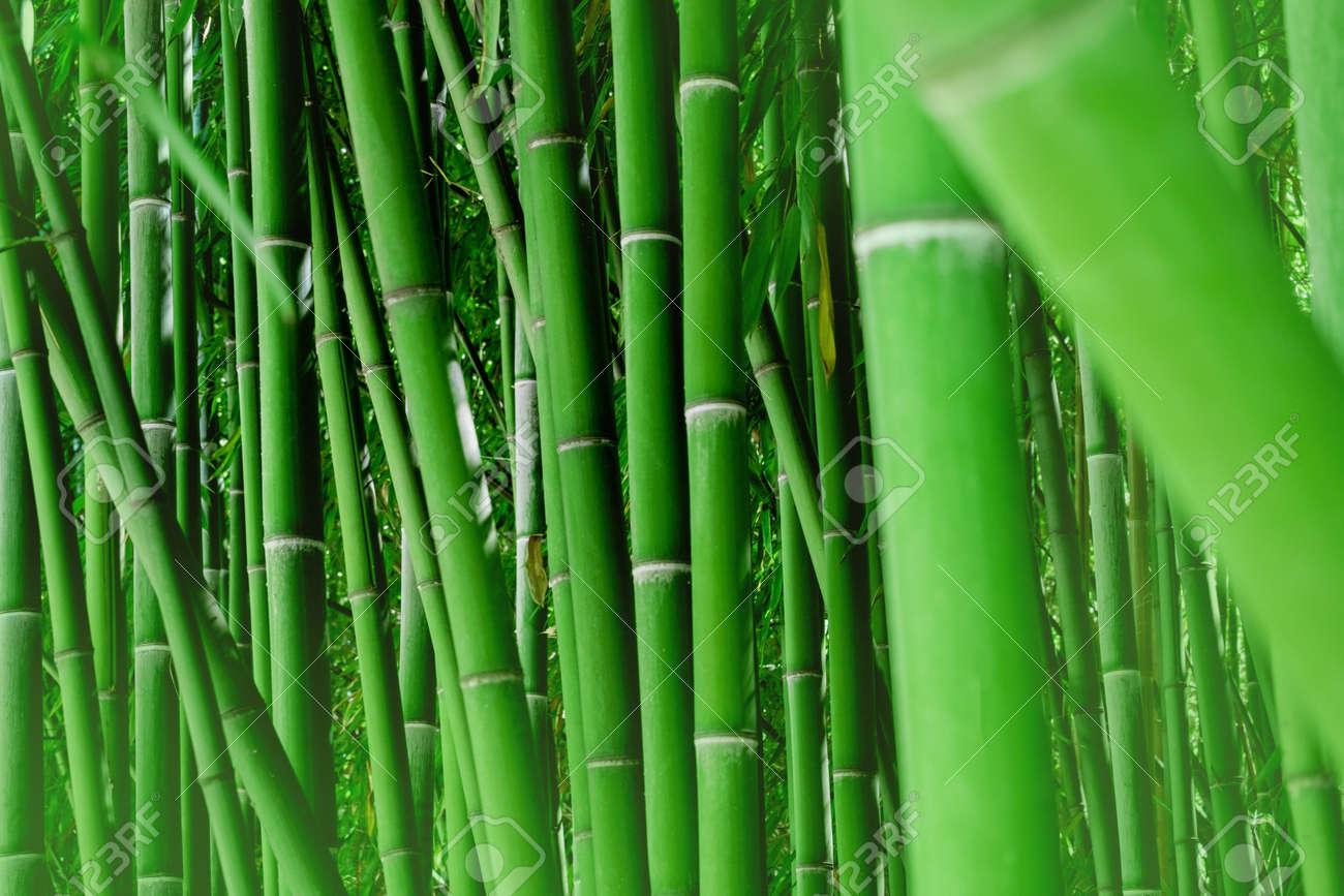 Horizontal natural bamboo wallpaper. Green background. - 167562629