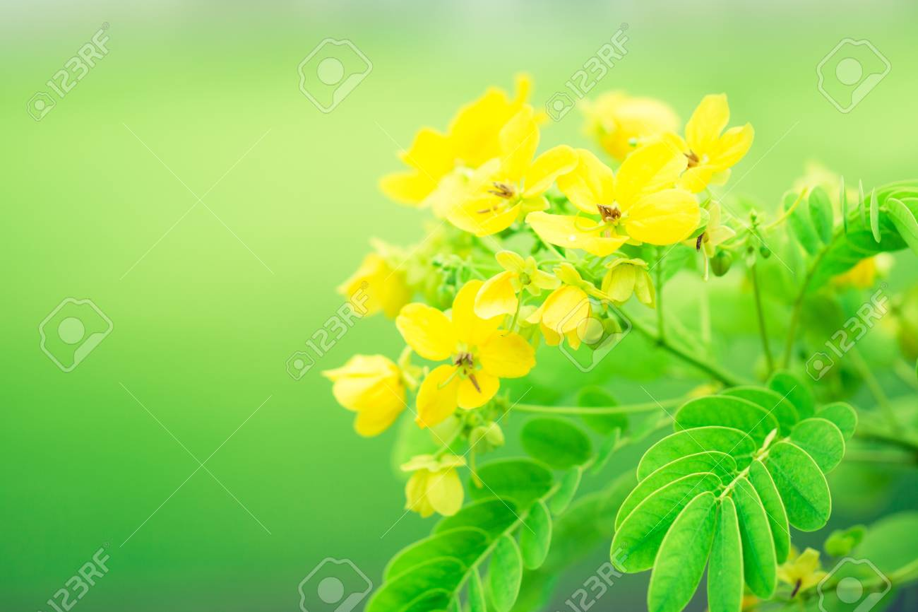 Spring Background Of Beautiful Yellow Flowers Vintage Style Stock