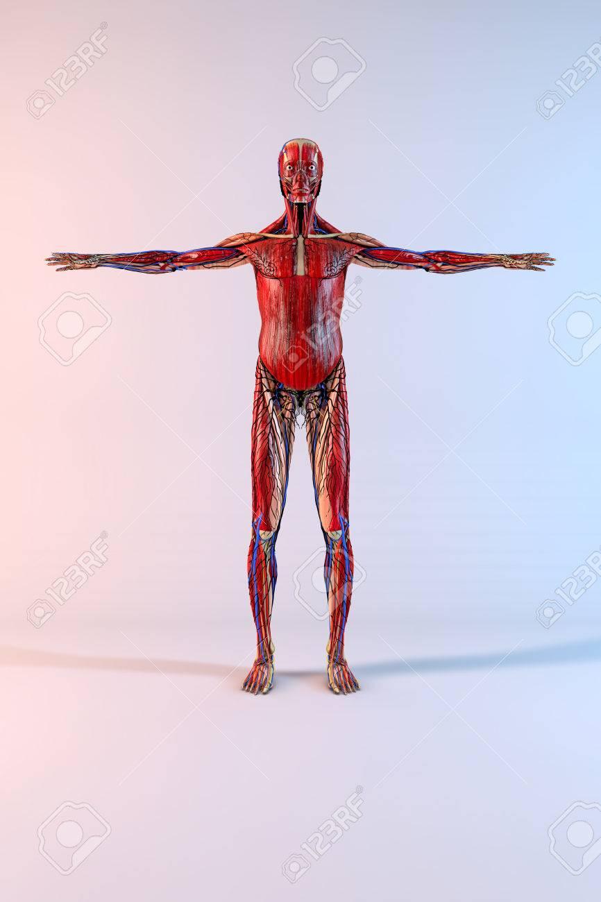 The unfashionable human body 97