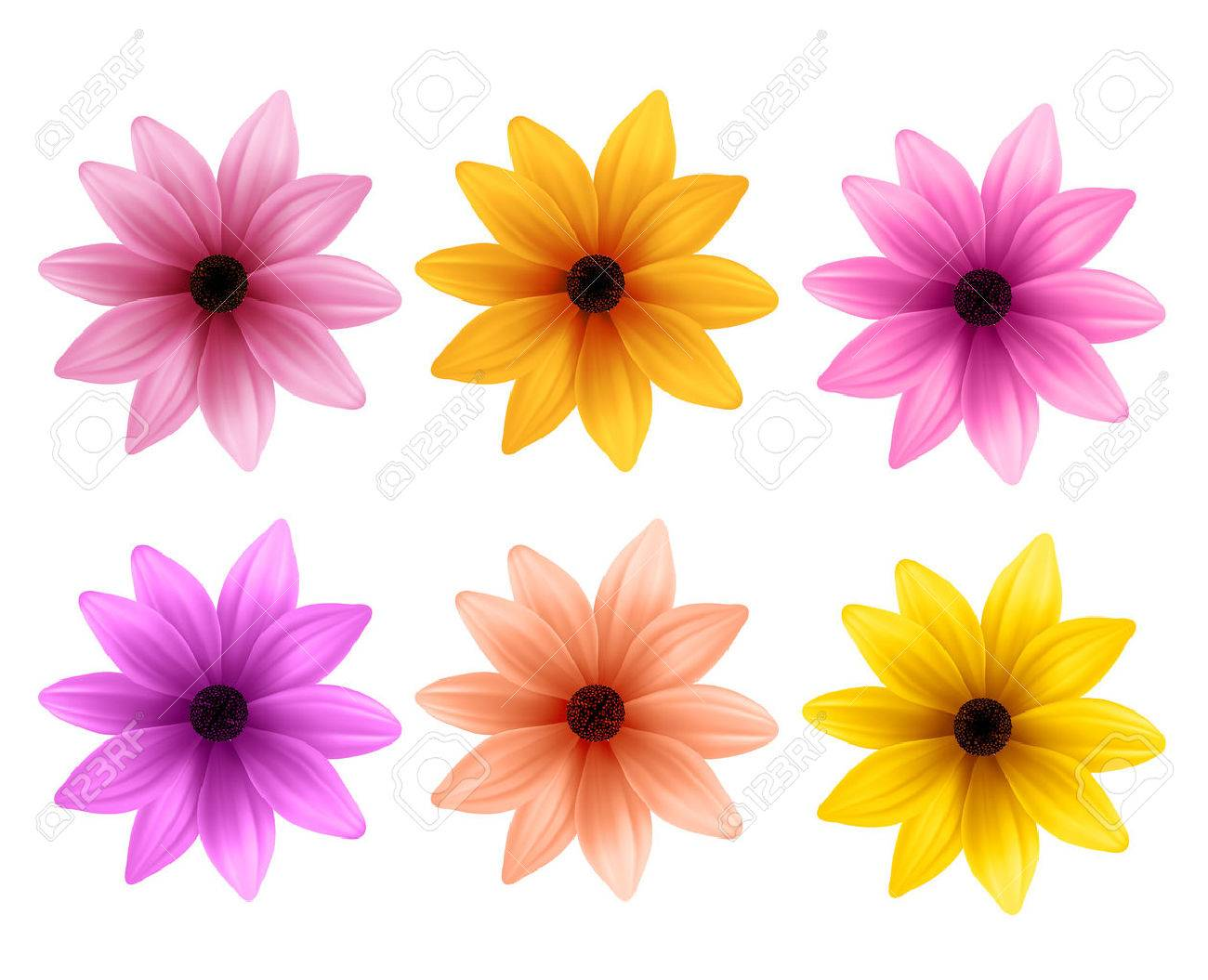 Realistic 3D Set of Colorful Daisy Flowers for Spring Season Isolated in White Background. Vector Illustration - 51701020