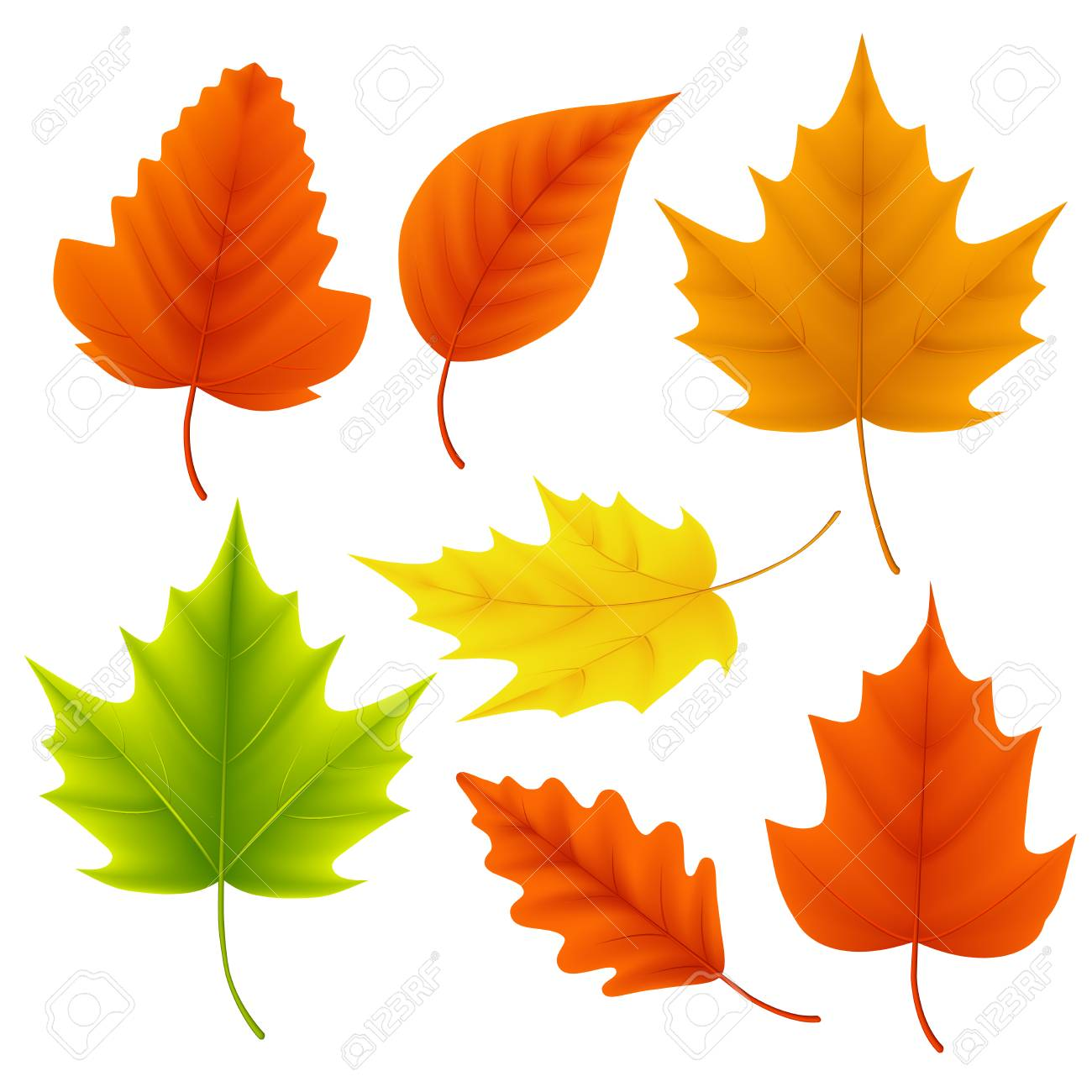 fall leaves vector set for autumn season and seasonal elements rh 123rf com fall leaves vector background fall leaves outline vector