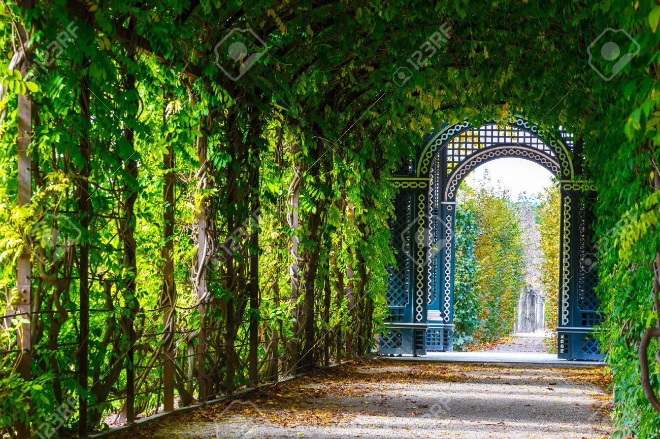 Romantic Garden Walkway Forming A Green Tunnel Of Acacias At Stock