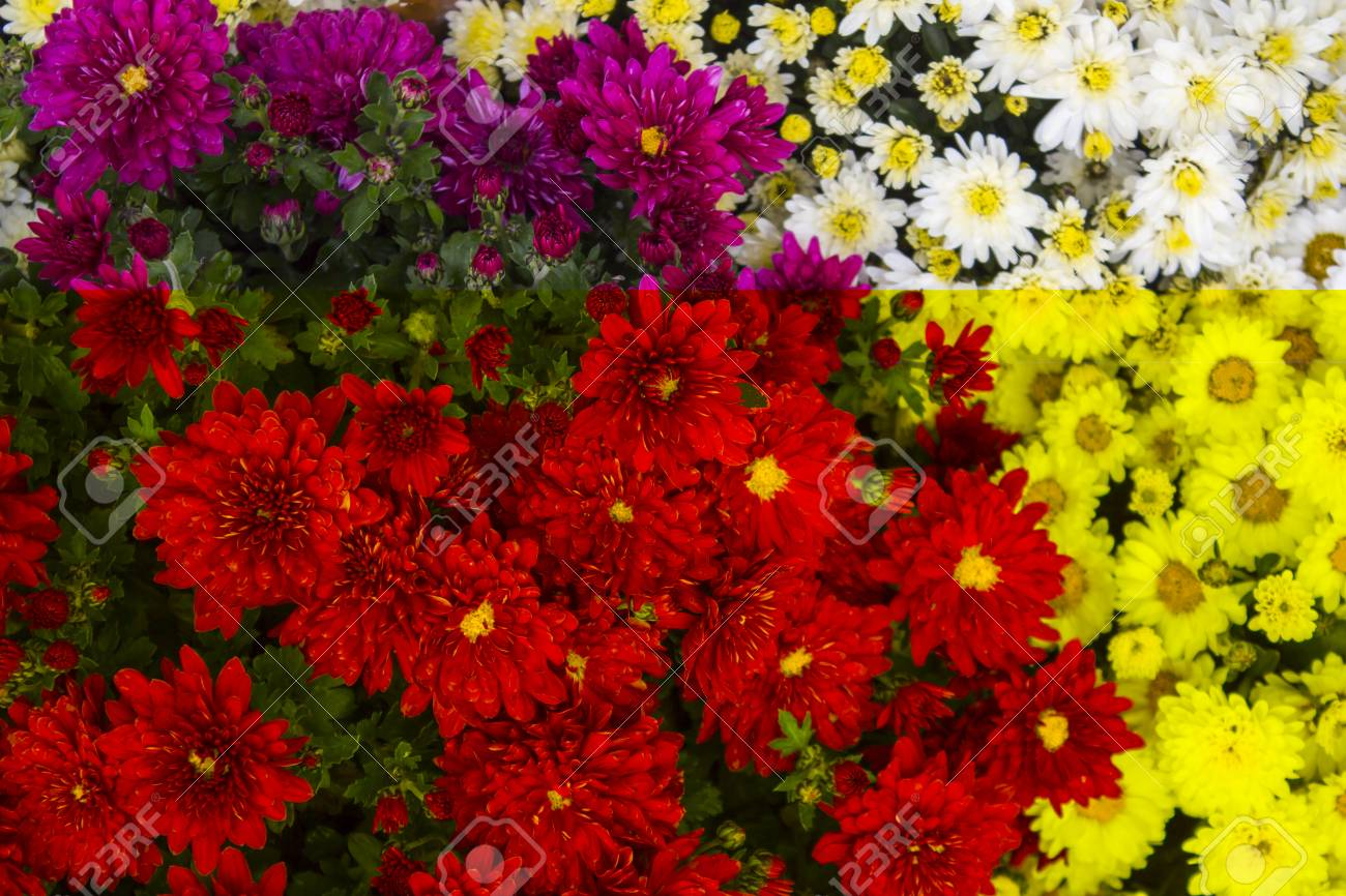 Flowers, Flowers, Flowers, Autumn, Red And Yellow, White And.. Stock ...