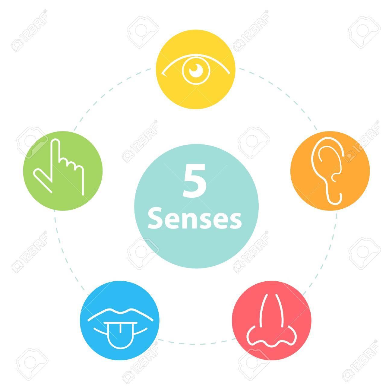 Five senses icons. - 88717979