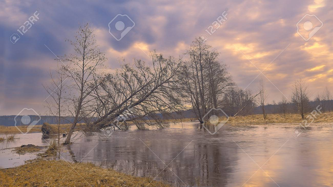 A Colorful Morning Landscape Of Nature In Early Spring Textured