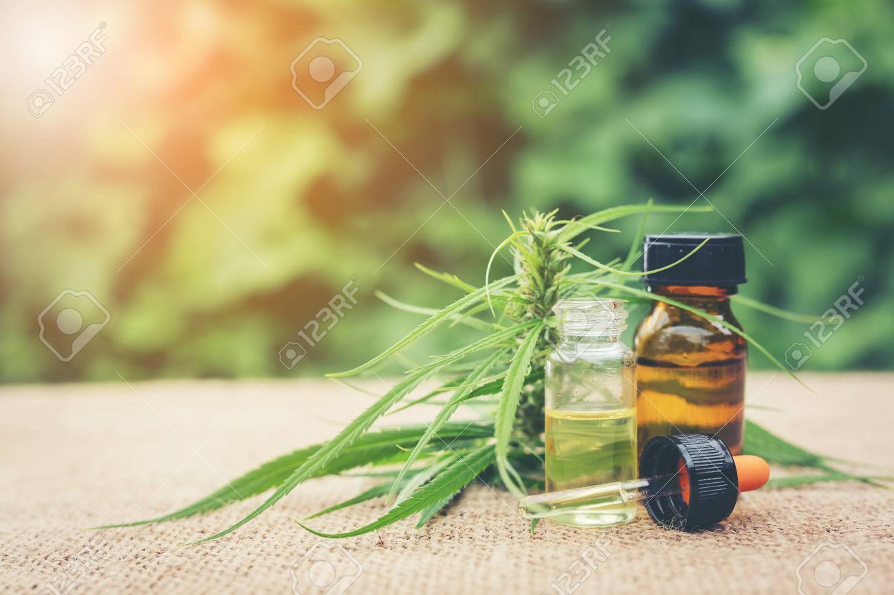 cannabis,Essential oil made from medicinal cannabis.Cannabis herb and leaves for treatment.Medical Cannabis ( Marijuana ) oil. - 85952488