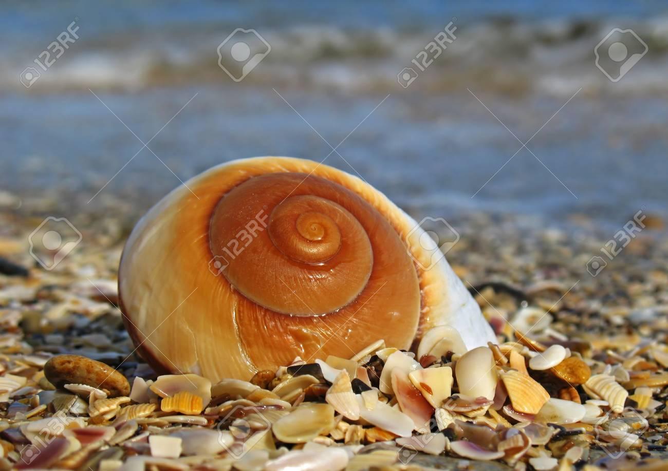 Shell on the beach Stock Photo - 2171332